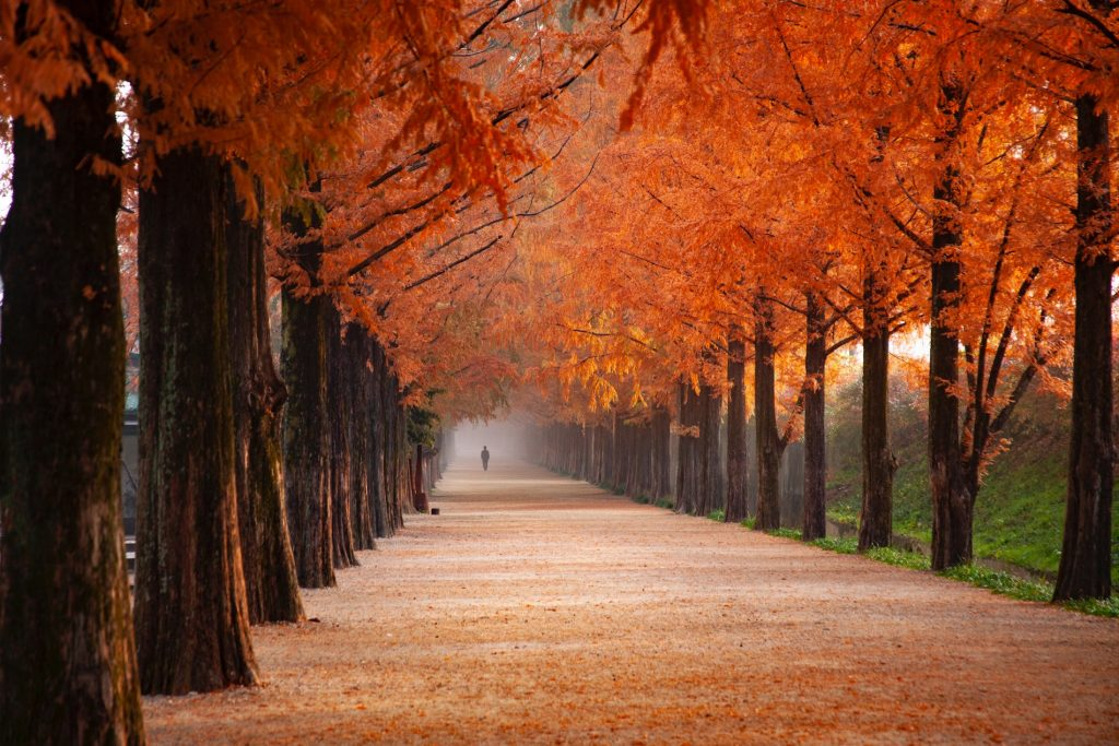 outono no canada 1